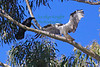 Raven&Osprey3928