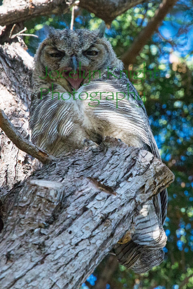 Owl0827
