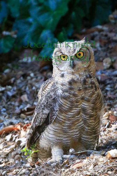 Owl0710