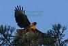 Hawk8739