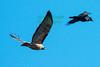 Hawk&Crow3674