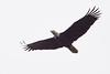 Eagle3116