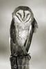 Sleepy barn owl in black and white
