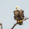 Eagles-12-5-16-213