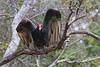 Vulture9227