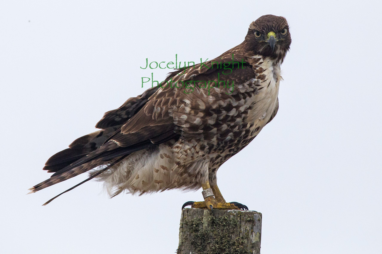 Hawk7418