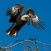 Bald Eagle Launch #1