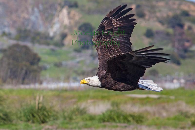Eagle4219