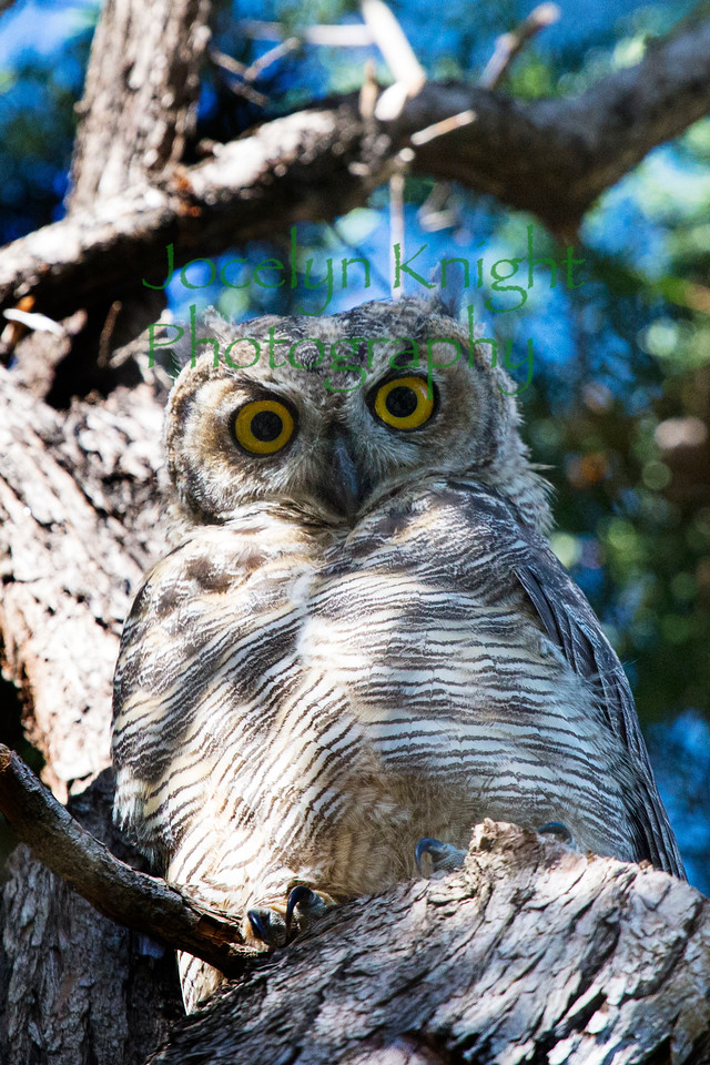 Owl0769