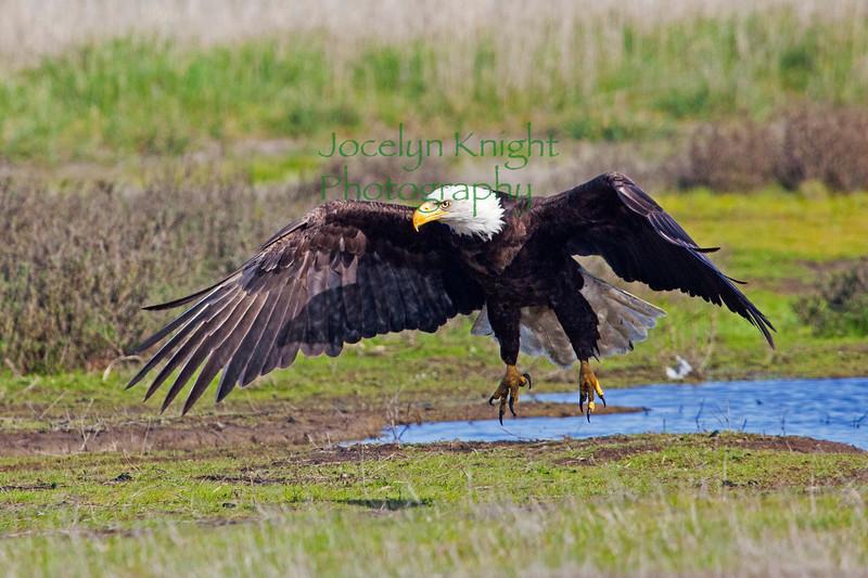 Eagle4212