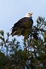 Eagle3072