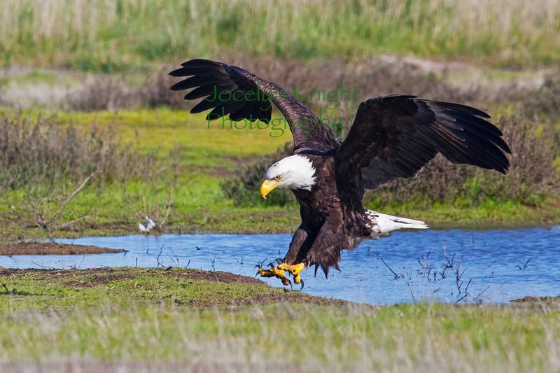 Eagle4208