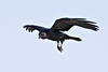 Raven in flight, feet pointing down, both wings up, wingtips blurred, cropped to 2400x1600 pixels