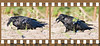 Raven, on ground, grabbing and tossing vegetation. Two image sequence.