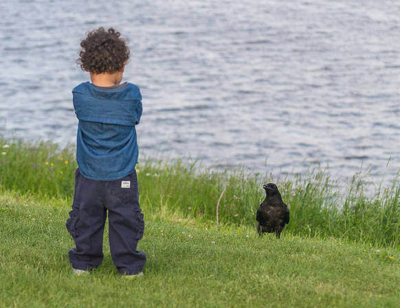 Drake and a juvenile raven stare at each other.