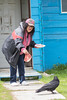 Denise Lantz offering meat to raven on sidewalk.