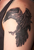 "Photograph by Joris van den Heuvel of tattoo based on Paul Lantz's image ""Common Raven, Wings bent close to ground""."