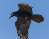 Raven overhead 2006 December 11th.