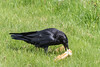 Raven examing hot dog buns.