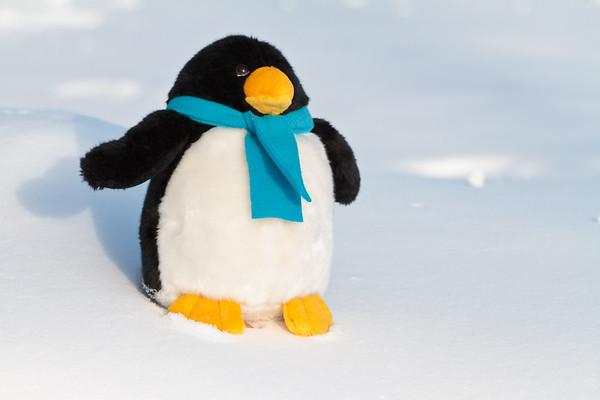 Stuffed penguin in snow.