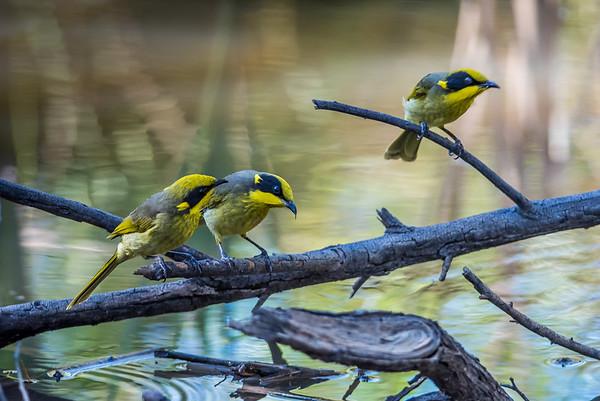 Recently Captured Bird Images