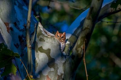 Screech Owls station road_0151