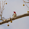 Birding 0102