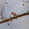 Birding 0153