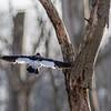 Beaver Marsh birding 1846