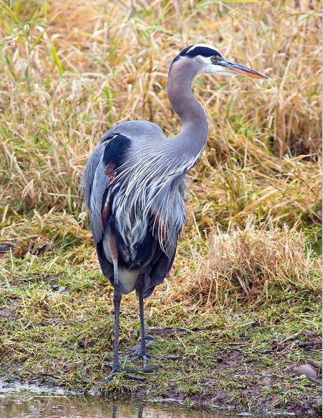 Ridgefield Natl Wildlife Refuge