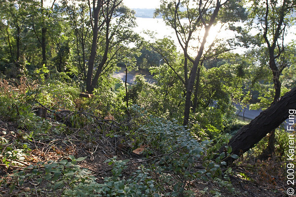 """August 24th:  Taken after more trees and limbs were cut down in the """"Forever Wild"""" section of Riverside Park, giving a more open view of the Hudson River from the Viewing Platform.  To see a larger version, move the mouse over the photo and click """"Original""""."""