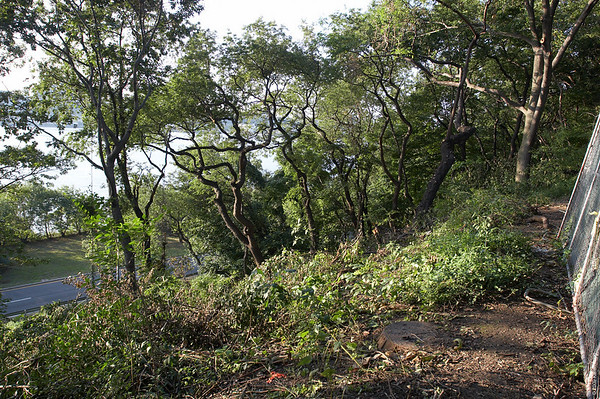 """August 24th:  Taken after more trees were cut down in the """"Forever Wild"""" section of Riverside Park, giving a more open view of the Hudson River from the Viewing Platform, which is to the right of the fence.  To see a larger version, move the mouse over the photo and click """"Original""""."""