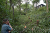 """Aug 18th:  Today these trees were cut down in Riverside Park's Bird Sanctuary, despite the Sanctuary's designation as a """"Forever Wild"""" area.  That's the Viewing Platform at the top, which is located on Riverside Drive, across from Grant's Tomb."""