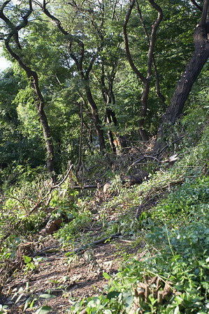 """August 24th:  Taken after more trees and limbs were cut down in the """"Forever Wild"""" section of Riverside Park, giving a more open view of the Hudson River (to the left) from the Viewing Platform (to the right).  To see a larger version, move the mouse over the photo and click """"Original""""."""