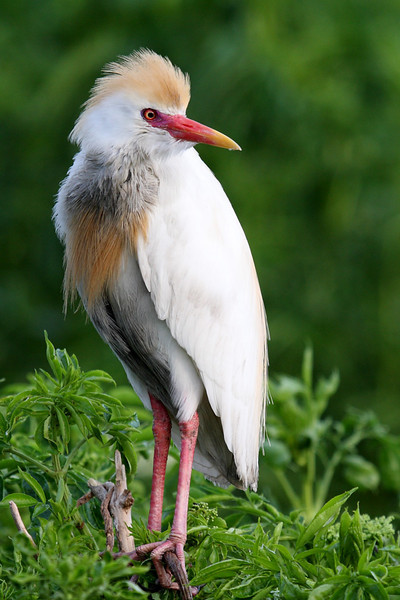 This is the same bird in a different pose to better show his/her colors.