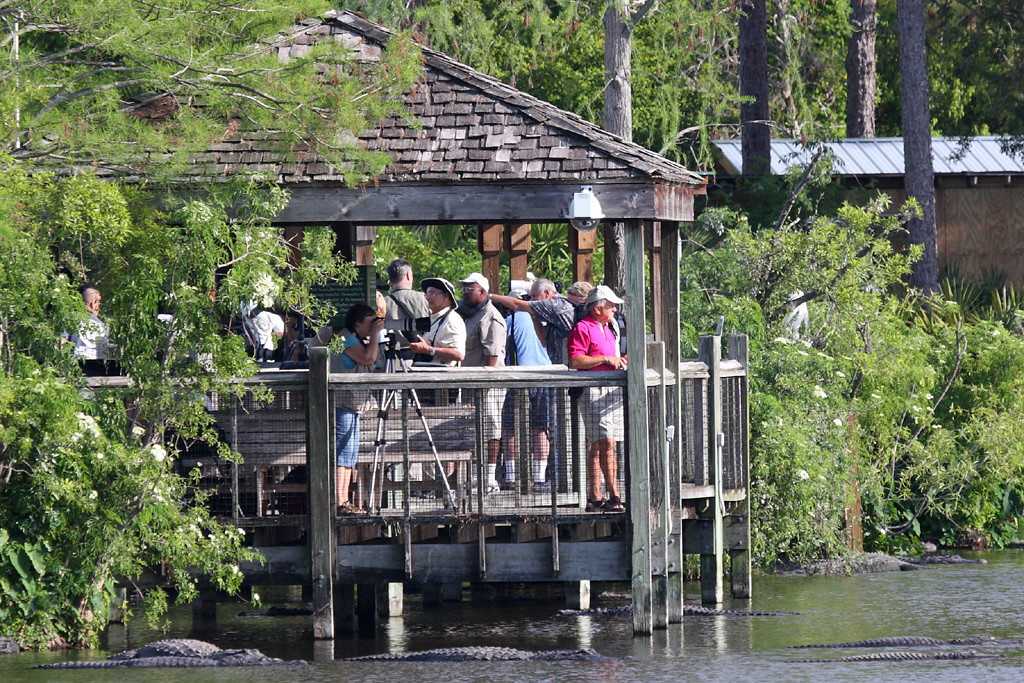 A gazebo filled with photographers and surrounded by alligators. Don't fall in, folks!