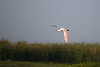 """""""Roseate Spoonbill Airlines, this is Fellsmere control. Please come right to one eight zero and reduce speed to ten knots.""""<br /> """"This is Roseate Spoonbill. Roger, one eight zero and reduce speed to ten knots."""""""
