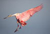 """Another spoonie heads for the """"runway."""""""