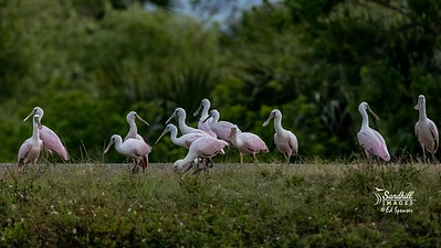 Roseate spoonbill day care facility