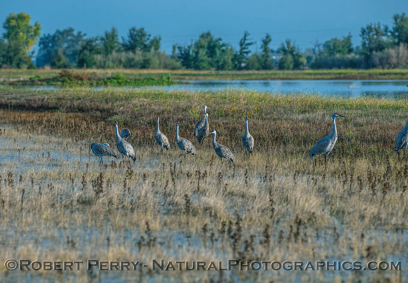 Consumes wetlands with cranes.