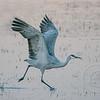 Skipping Crane
