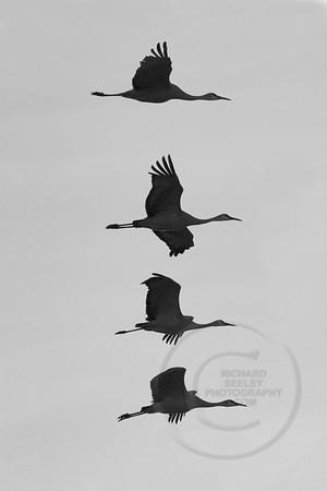 Stack of Cranes