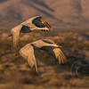Crane Duo Landing