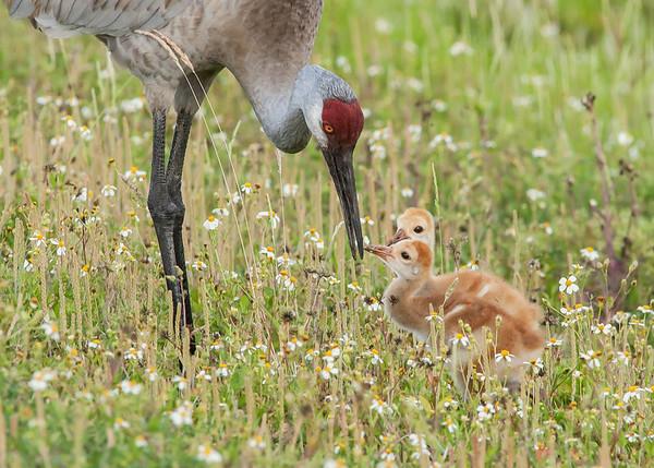 Feeding the Little Ones