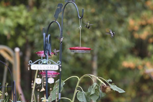 Sandi Humming Birds