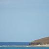 Seabirds-Oahu_Hawaii-8177