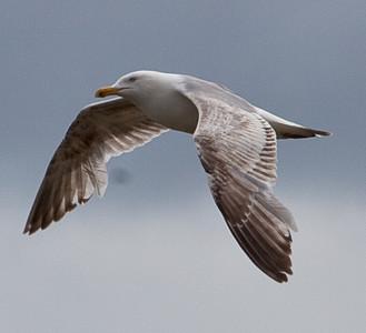 Downward wing