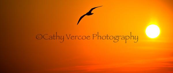 A bird flies against the setting sun. Taken from Brighton Pier, UK