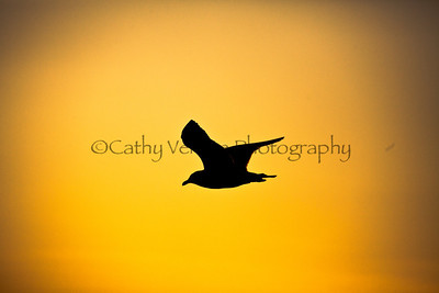 A bird flies across the sun at dusk. Taken from Brighton Pier, UK