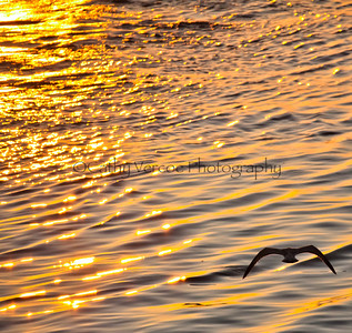 A seagull flies across the golden sea as the sun sets. Taken from Brighton Pier, UK